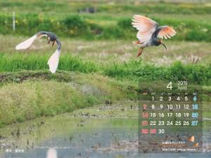 トキファンデスクトップカレンダー