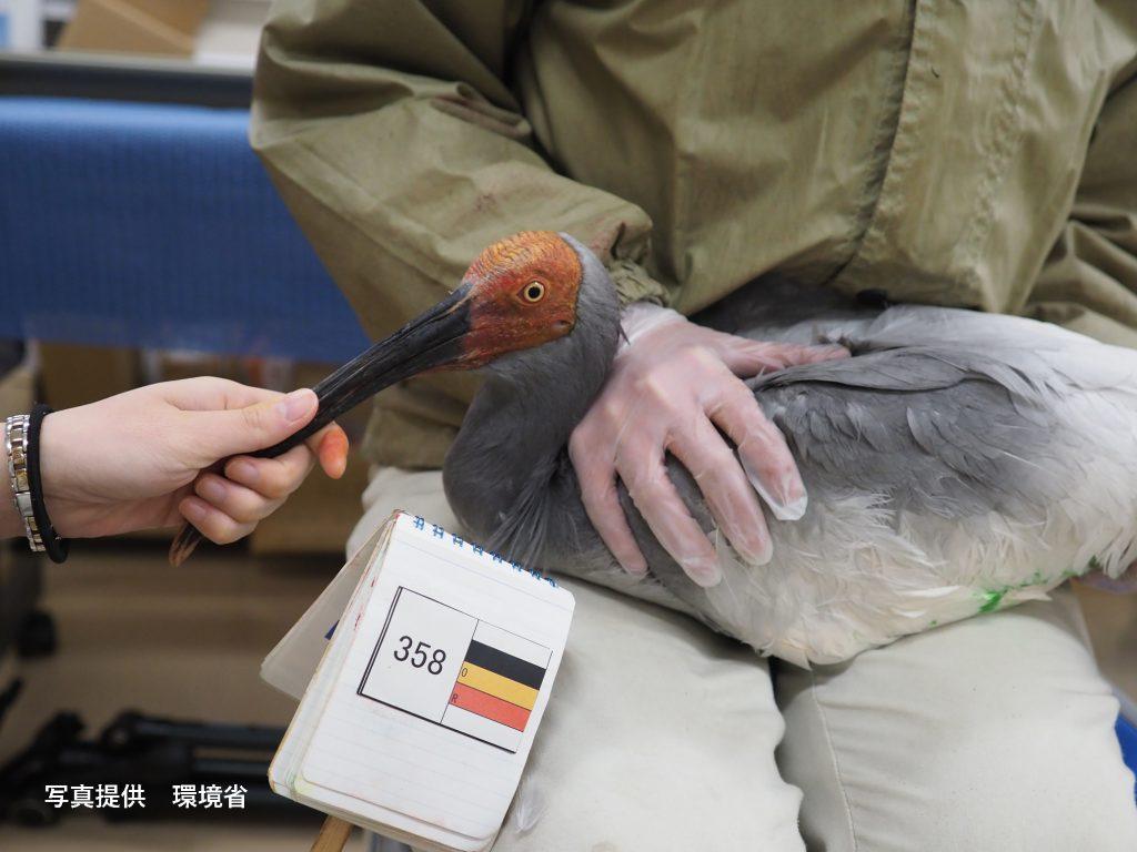 第20回放鳥訓練