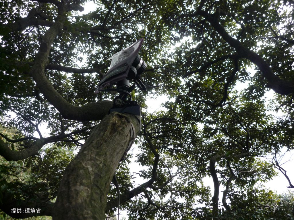 樹上カメラ設置