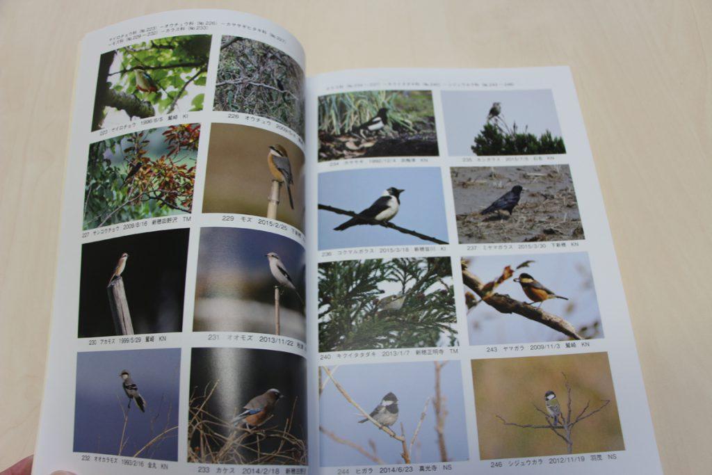 トキの島の野鳥