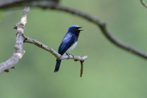 「佐渡の鳥を愉しむ」